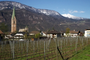 Vineyards in the stunning wine region of Alto Adige