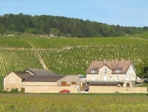 Chablis_Grand_Cru_vineyards