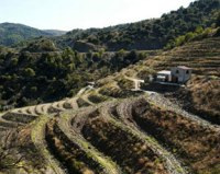 The steep slopes of Priorat
