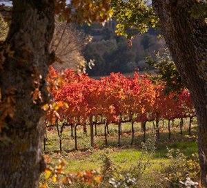 Perticaia Vineyard