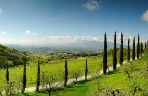 Lucca Hills - Tenuta