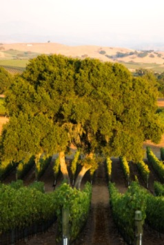 Jonata Vineyard, Winery, 191.6, Ballard Canyon, California(Multi