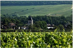 Malandes Chablis Vineyard