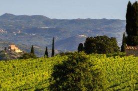Mastrojanni vineyard