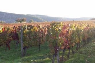 Ch la caminade vineyard