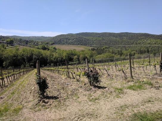 Sassetti Pertimali Vineyard