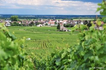 Girardin vineyards