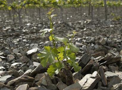 Priorat llicorella soils.png