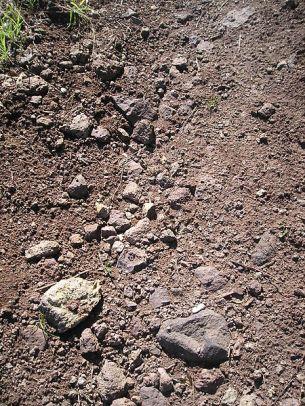 Soave_Volcanic_Soil