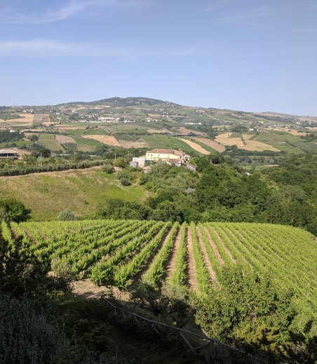 Fontanavecchia vineyards