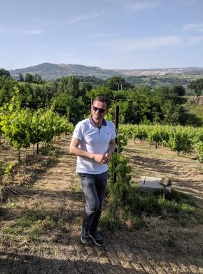 Fontanavecchia Vineyards2