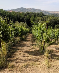 Fontanavecchia vineyards3