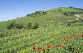 Inama vineyards