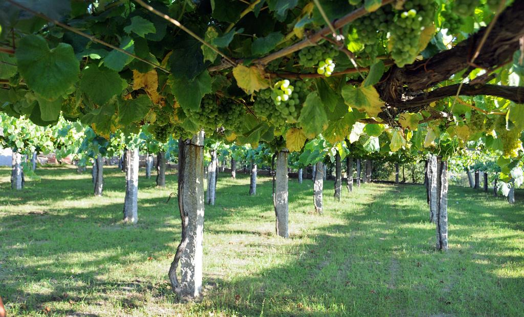 Rias Baixas Vineyards